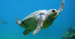 Tortue sous-marine